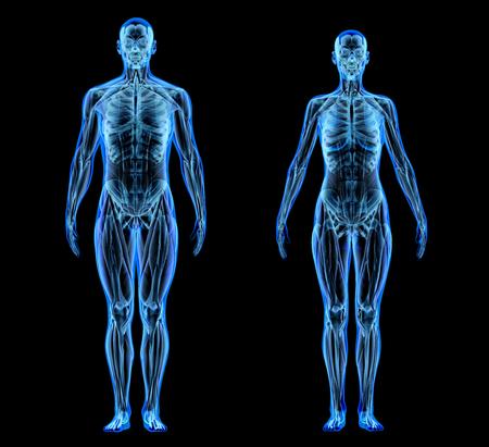 Sistema muscolare e scheletrico dell'uomo e della donna. Effetto a raggi X su sfondo nero.