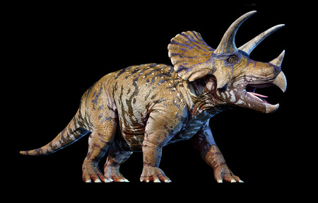 Triceratops 3d rendering On black background perspective view.