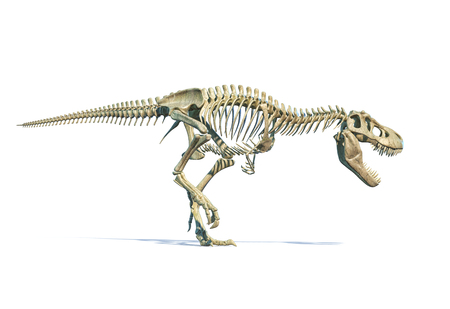 Tyrannosaurus Rex dinosaur photorealistic 3d rendering of full skeleton on white background. Stock Photo