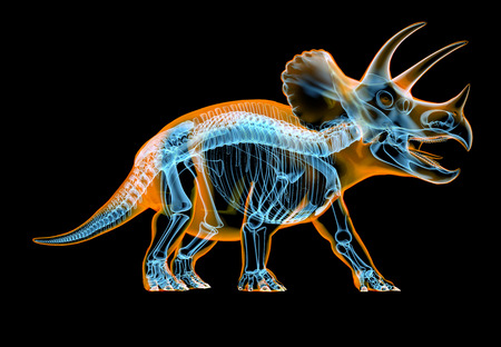 Triceratops skeleton x-ray effect. perspective view on black background. Banco de Imagens
