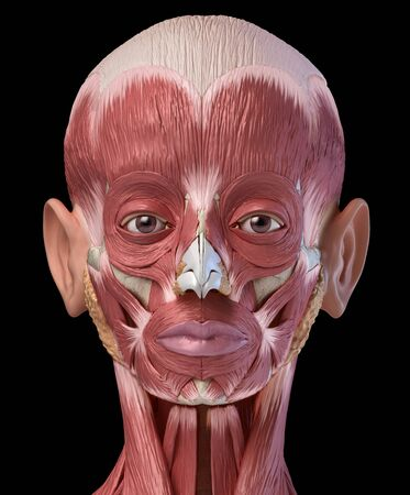 Human head anatomy 3d illustration muscular system, frontal view on black background.