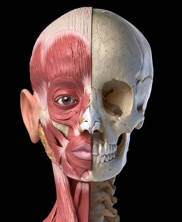 Human anatomy 3d illustration of the head muscles on left side and skull on right side. Anterior view on black background. Stockfoto