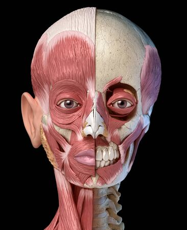 Human anatomy 3d illustration of the head muscles full on left side and partial on right side. Anterior view on black background.
