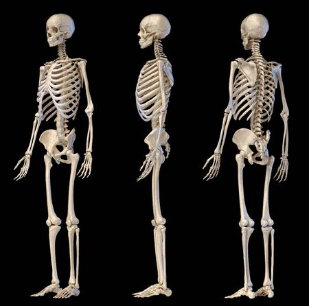 Human Anatomy full body male skeleton. Three views. Perspective Front rear and side on black background. 3d illustration. Stock Photo