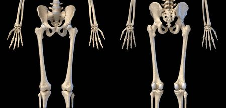 Human Anatomy, hip, limbs and hands skeletal system. Front and back views. On black background. 3d illustration. Stockfoto
