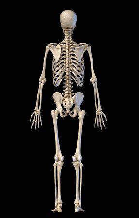 Human anatomy, skeletal system, full figure standing, back view on black background. 3d illustration.