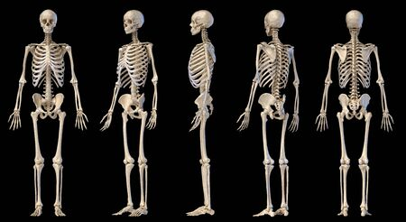 Human Anatomy full body male skeleton. Five views. Perspective, Front rear and side on black background. 3d illustration. Stockfoto