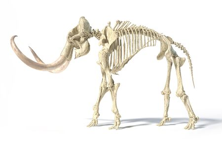 Woolly mammoth skeleton, realistic 3d illustration, viewed from a side. On white background and dropped shadow.