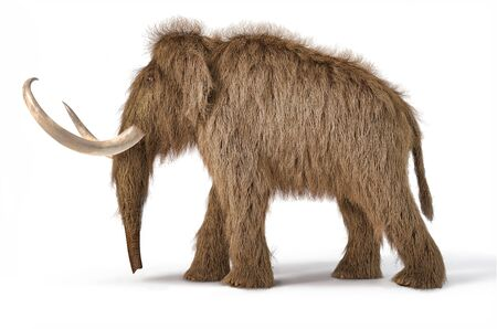 Woolly mammoth realistic 3d illustration viewed from a side. On white background with dropped shadow. 스톡 콘텐츠