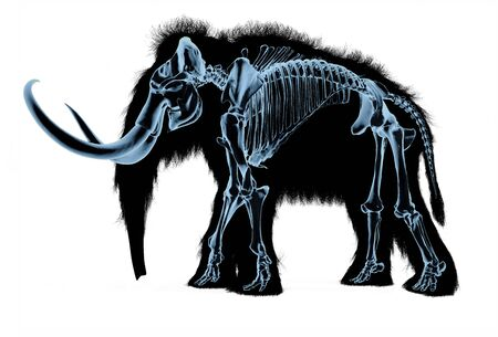 Woolly mammoth skeleton, x-ray effect. On black body silhouette and white background. 스톡 콘텐츠