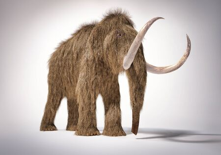 Woolly mammoth realistic 3d illustration viewed from Front perspective view. On white background with dropped shadow.