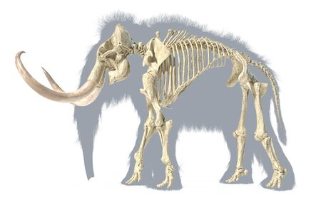 Woolly mammoth skeleton, realistic 3d illustration, viewed from a side. On white background with body grey silhouette.
