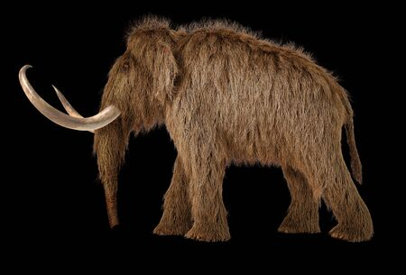 Woolly mammoth realistic 3d illustration viewed from a side. On black background.