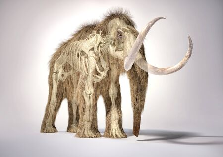Woolly mammoth realistic 3d illustration with skeleton in ghost effect, viewed from perspective front. On white background and dropped shadow.