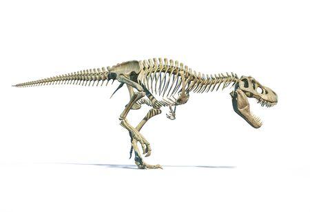 T-Rex full skeleton in dynamic pose. 3D photo-realistic illustration on white background.