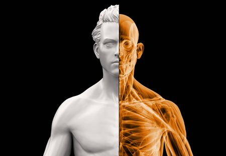 Anatomy man bust half x-ray and half in clay. 3d illustration on black background. Stock Photo