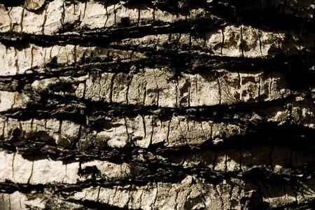 bumpy: extreme close-up on the bark tree Stock Photo