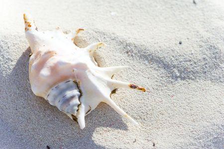 shell ending on the beach