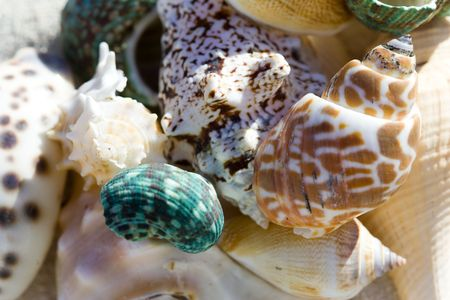 shell ending on the beach photo