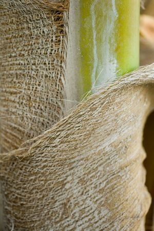 bumpy: palm bark texture