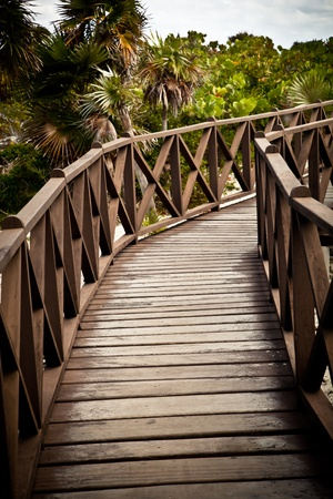 Brown Wood Bridge with palm trees landscape Banco de Imagens