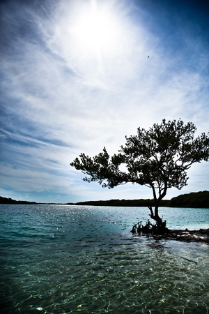 Black silhouette of a tree and on the ocean Archivio Fotografico