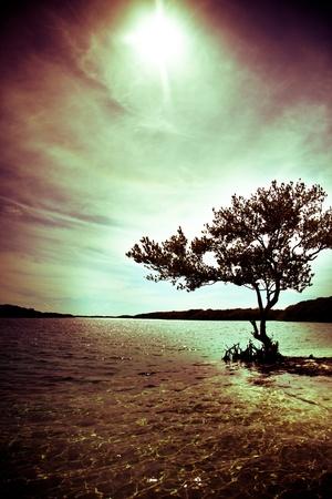 Zwarte silhouet van een boom en op de oceaan Stockfoto