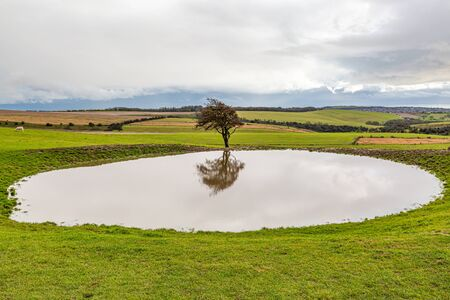 A tree and its reflection in a dew pond, on Ditchling Beacon in Sussex
