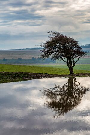 Reflections of a tree and clouds in a dew pond, at Ditchling Beacon in Sussex