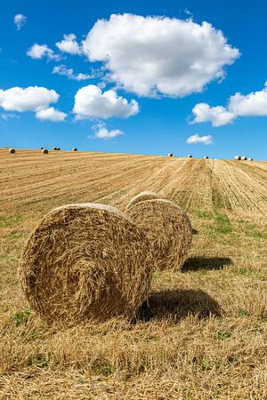 Hay bales in the Sussex countryside on a sunny late summers day