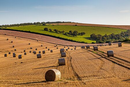 A summer landscape in the South Downs in Sussex, with hay bales in a newly harvested field 版權商用圖片