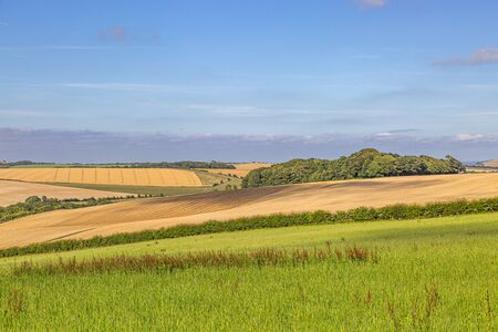Green meadows and golden fields in Sussex, during summer