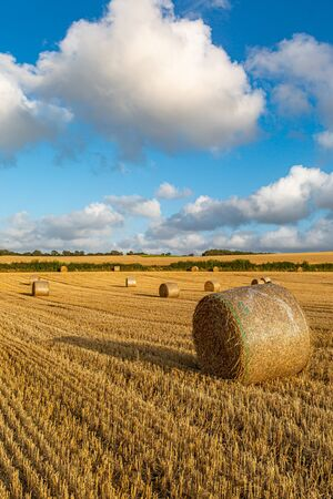 Hay bales in a field in Sussex, on a sunny summers evening