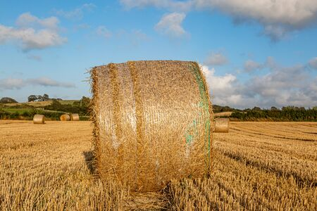 Hay bales in a field in Sussex, on a sunny summers evening Stockfoto