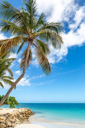 A palm tree on an idyllic Caribbean Beach, with a turquoise sea behind