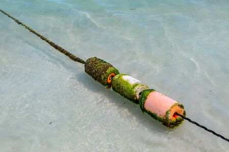 A weathered mooring line in shallow water