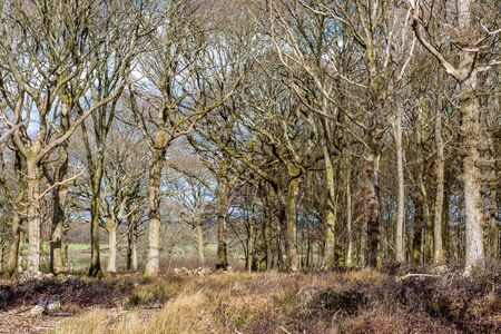 Bare trees in the late winter sunshine, in Sussex