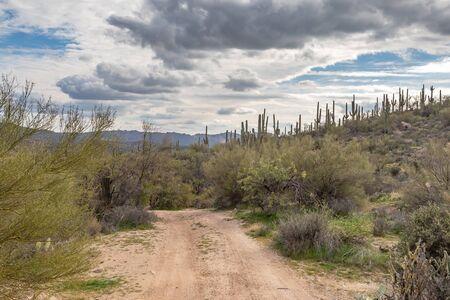 A dirt road in the Arizona desert with saguaro cactus growing around 写真素材