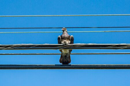 Looking up at a bird perched on telegraph wires with a blue sky behind