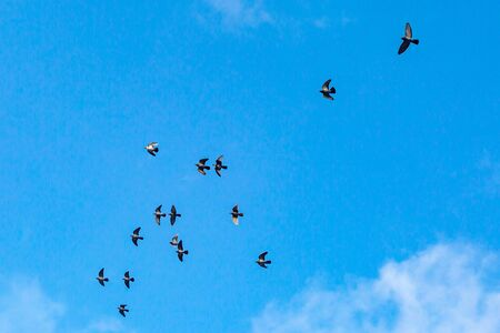 Looking up at birds in flight against a blue sky