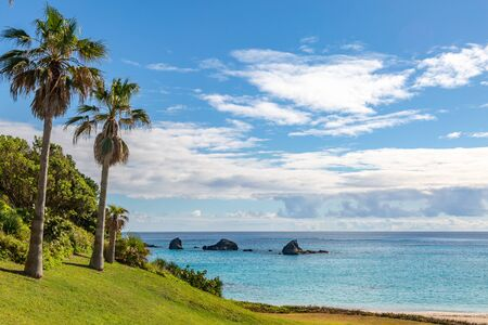 Palm trees at the coast, on the island of Bermuda Stock Photo