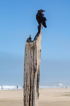 A bird perched on a wooden post on a sandy beach, in San Francisco