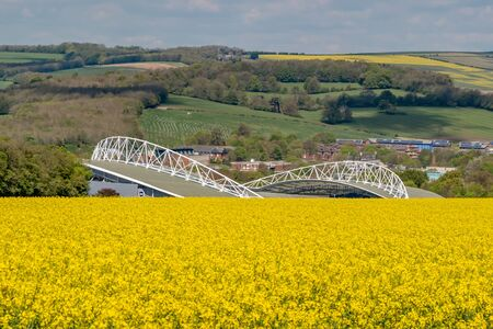 Looking over a Canola/Rapeseed Field Towards  Brighton and Hove Albion Football Stadium