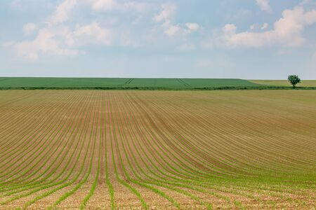 A rural French landscape in spring, with crops growing in fields