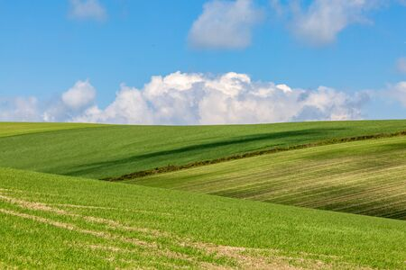 A green Sussex landscape on a sunny spring day