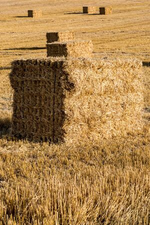 Haystacks in a field in Sussex, with a shallow depth of field Imagens