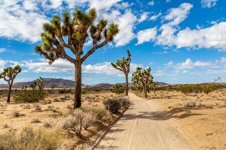A narrow dusty road through Joshua Tree National Park in California