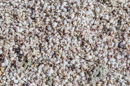 Looking down on a bed of seashells at Salton Sea Beach Banco de Imagens