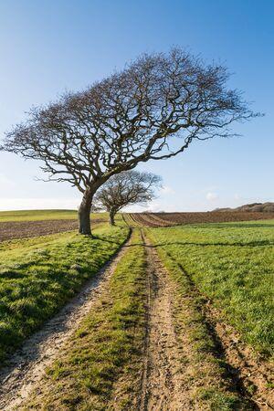 A pathway through farmland, on a sunny winters day