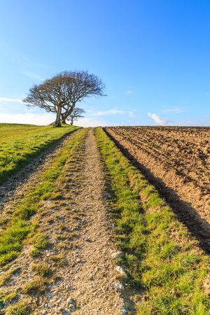 A pathway leading through farmland, on the Isle of Wight